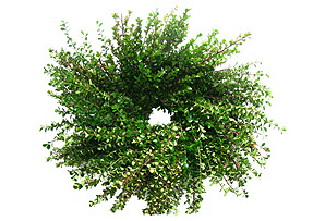 "18"" Boxwood Wreath, Dried"