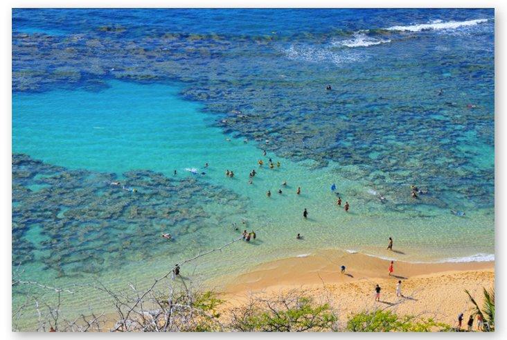 Richard Silver, Hawaiian Swimmers 1