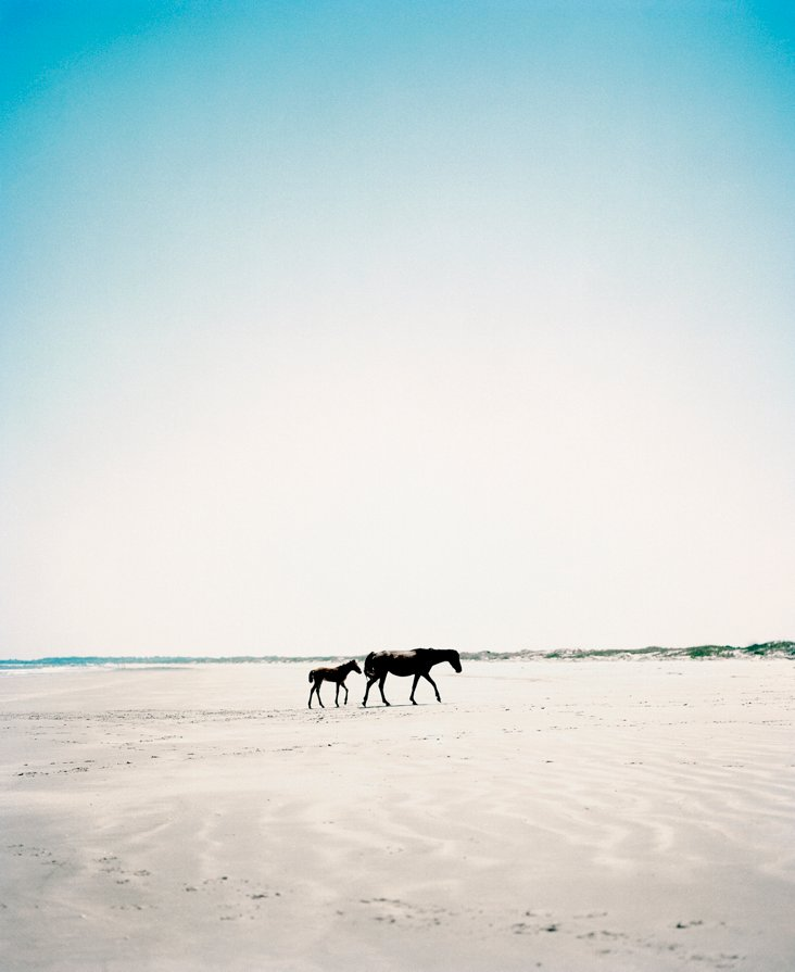 Patrick Cline, Island Horse