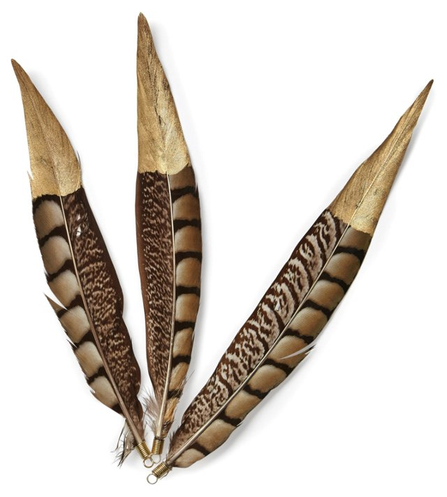 S/6 Pheasant Feathers w/ Gold Tips