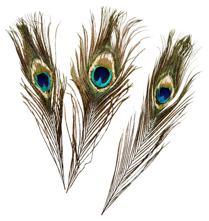 S/3 Peacock  Eye Feathers w/ Gold