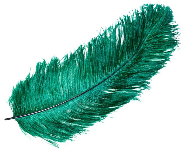 S/6 Ostrich Femina Feathers, Teal