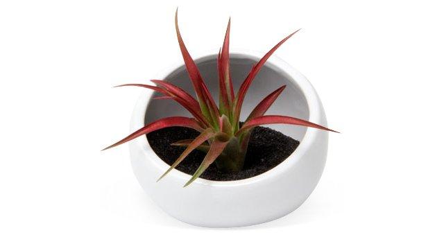 Half-Moon Vase, White