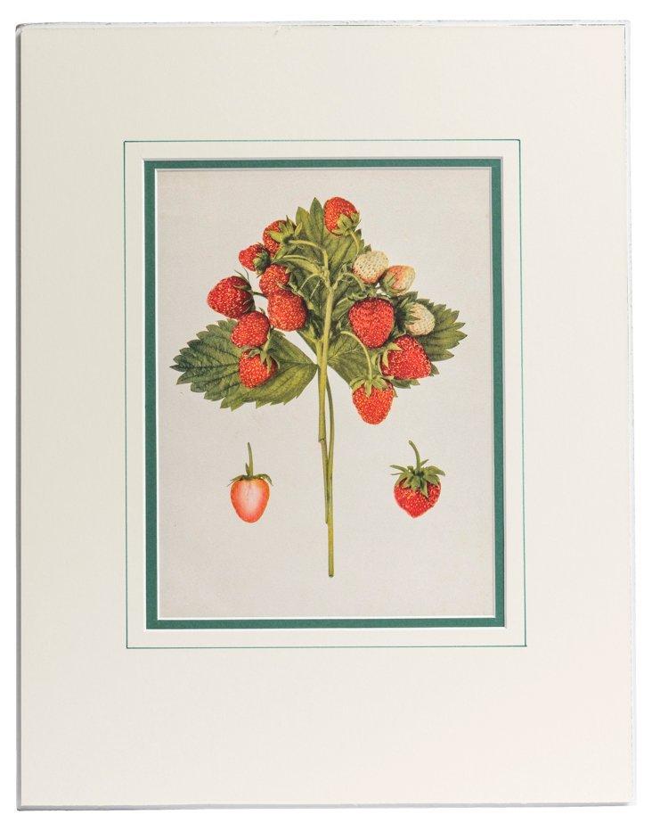 Matted Print, Strawberries I