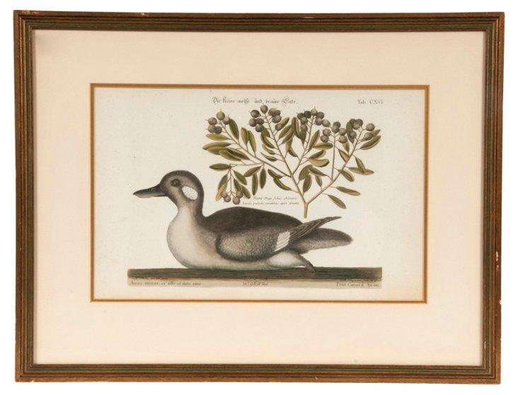 18th-C. Martinet Duck Print