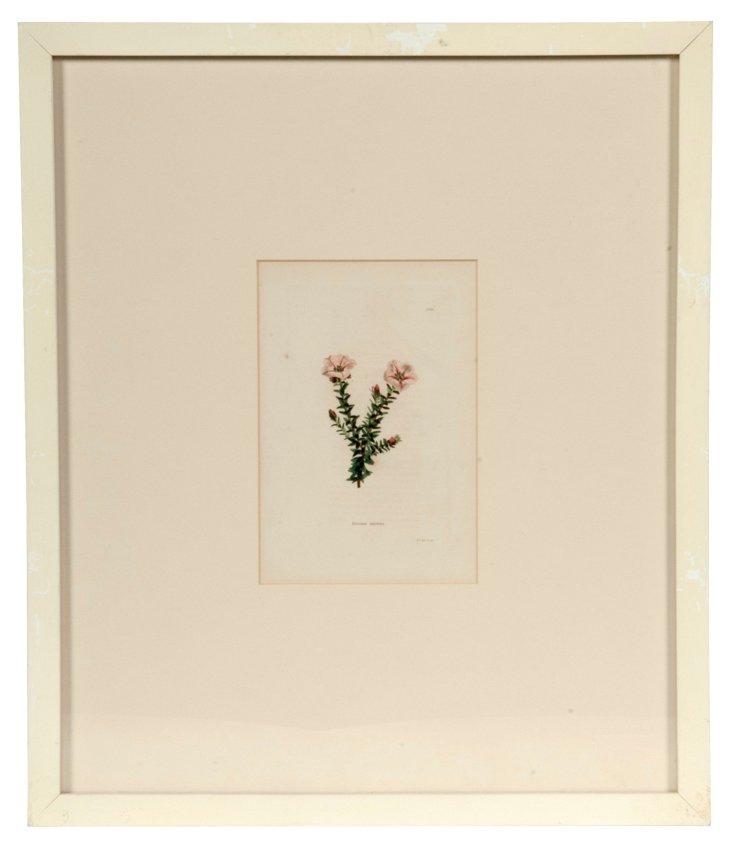Botanical Print IV