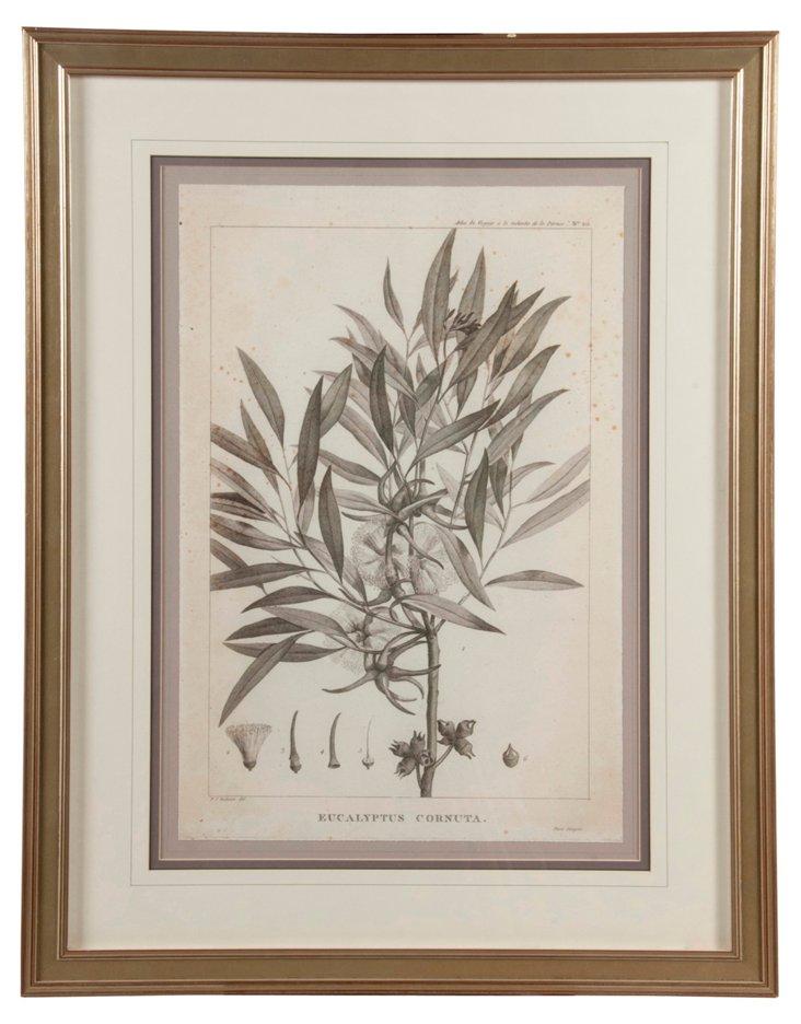 Botanical Monochrome Leaves Print