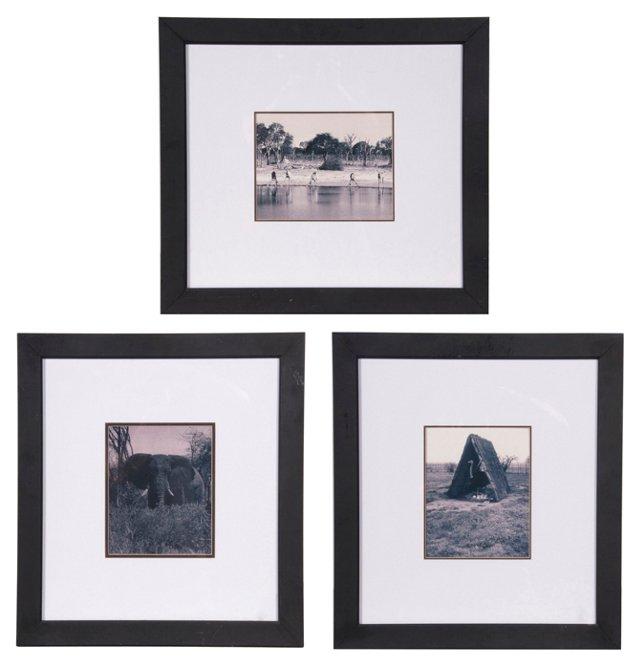 Animal Photos, Set of 3