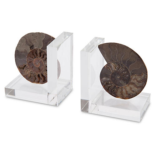 S/2 Ammonites On Crystal Bookends, Brown