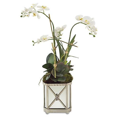 """34"""" Orchid Arrangement in Planter, Faux"""