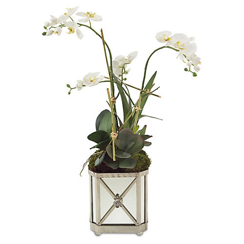 "34"" Orchid Arrangement in Planter, Faux"
