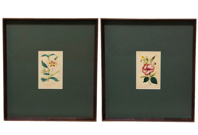 Antique Green Matte Botanical Prints, Pair