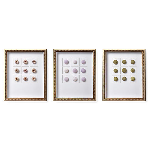Asst. of 3 Sea Urchin Shadow Boxes