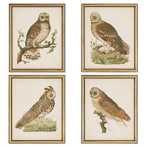 Nozeman, Nozeman Owls