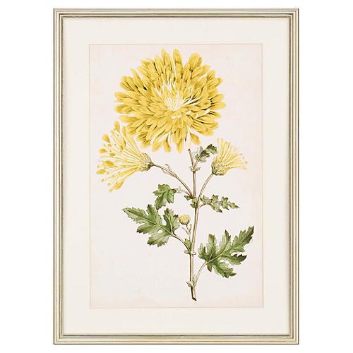 , Floral Lace IV