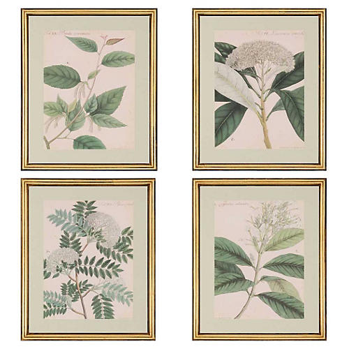 Botanicals Pk/4