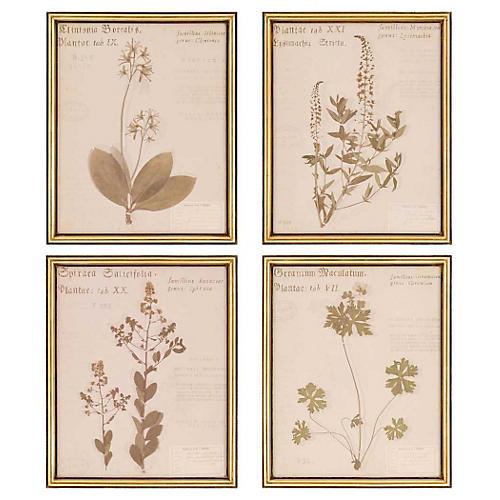 , Botanicals