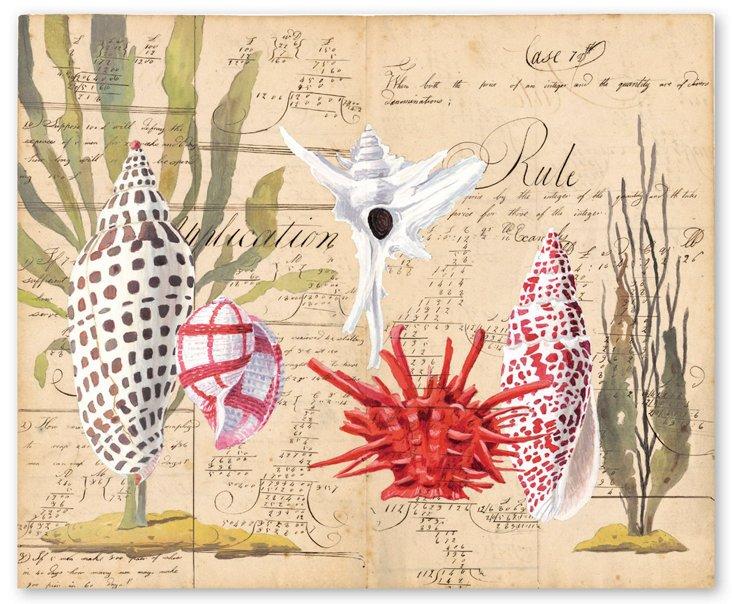 Harrison Howard, Shells with Sea Grass