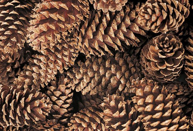 "S/24 5"" Cinnamon-Scented Pinecones"