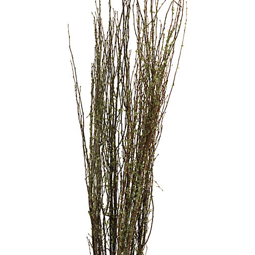 S/20 New Leaf Birch Branches, Dried