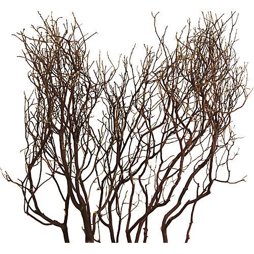 S/5 Manzanita Branches, Dried