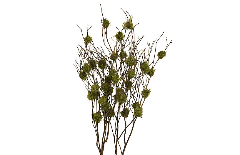 S/4 Mountain-Laurel Branches, Dried