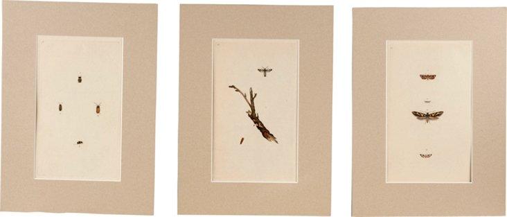 Original Naturalist Plates, Set of 3