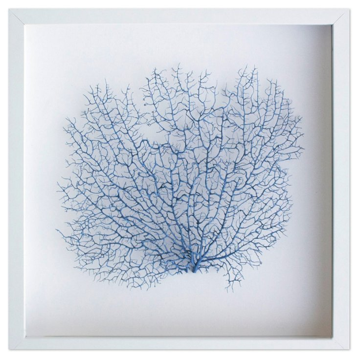 Exotic Sea Fan, Navy
