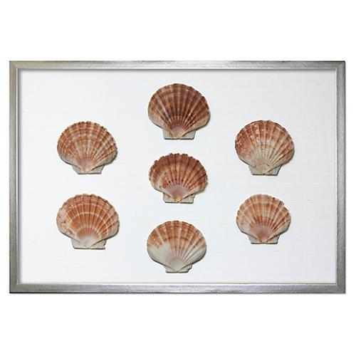 Framed Scallop Shells