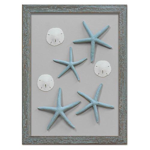 Framed Starfish & Sand Dollars VI