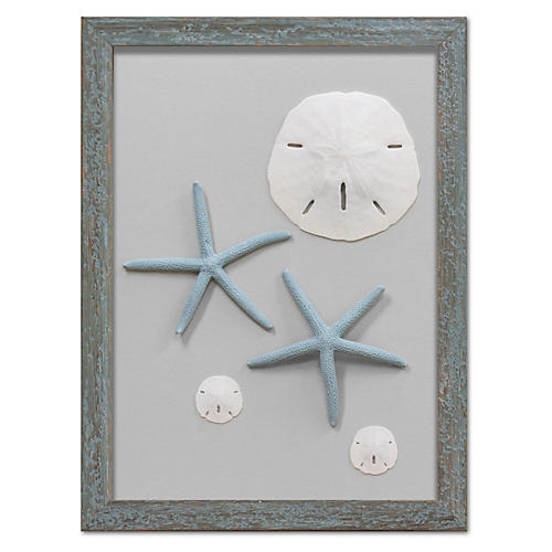 Framed Starfish & Sand Dollars VII