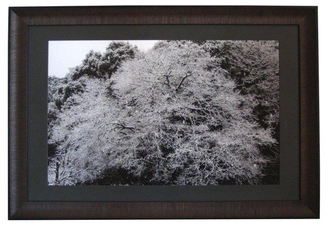 Black Oak Tree in Snow by Gaetan Caron