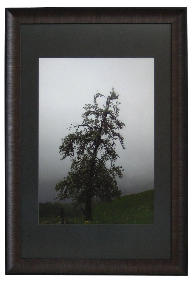 Wild Pear Tree w/ Morning Fog by Caron