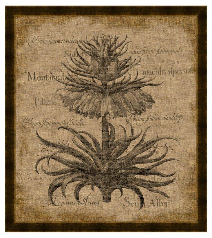 Imperialis Florum