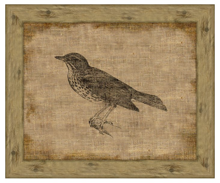 Song Thrush on Antique Linen
