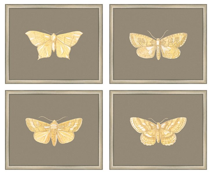 Glorious Moth, Set of 4