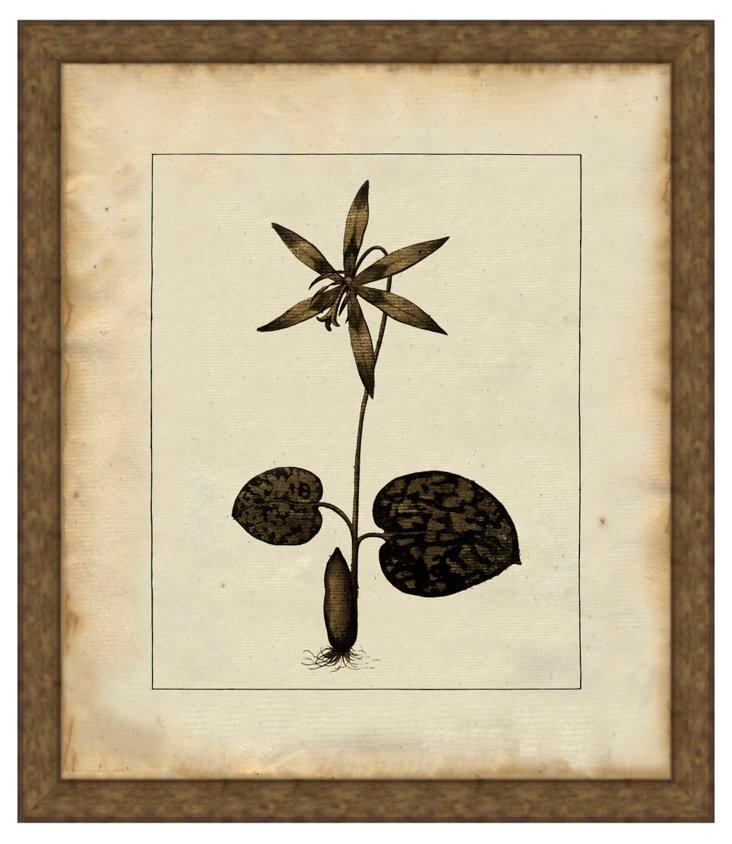 Java Botanical Stems I