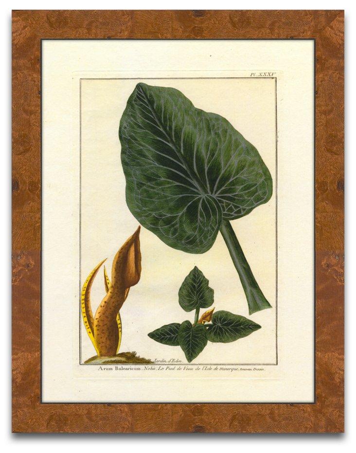 Botanical By Buchaz II