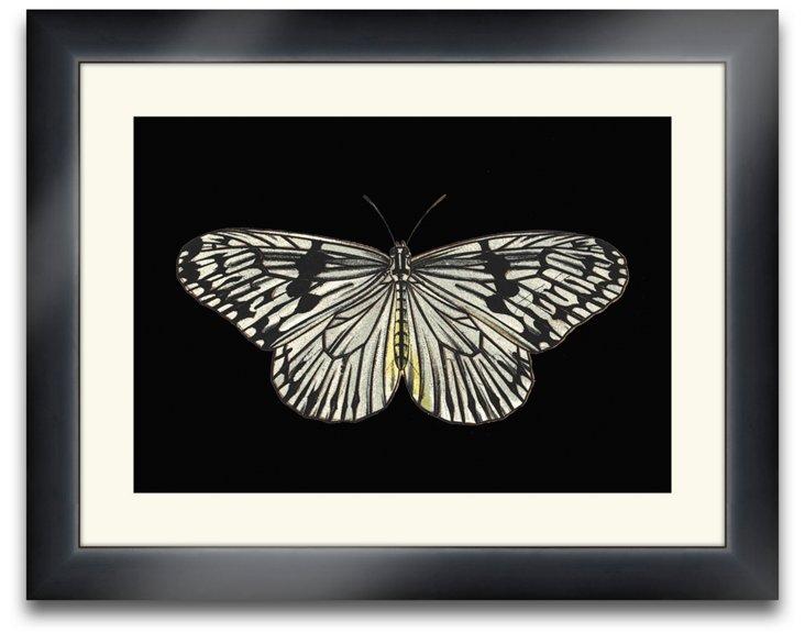 Lloyd  Butterfly II