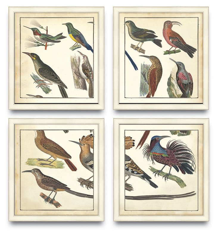 Tropical Bird Panel, Set Of 4