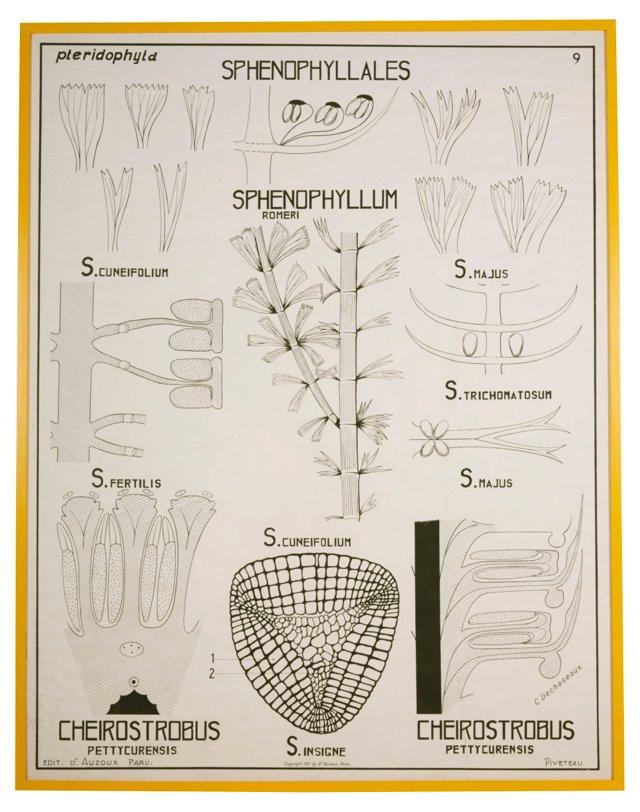 Giant Framed Botanical Diagram Poster