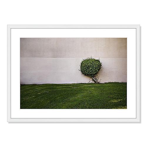 Jeff Seltzer, A Tree