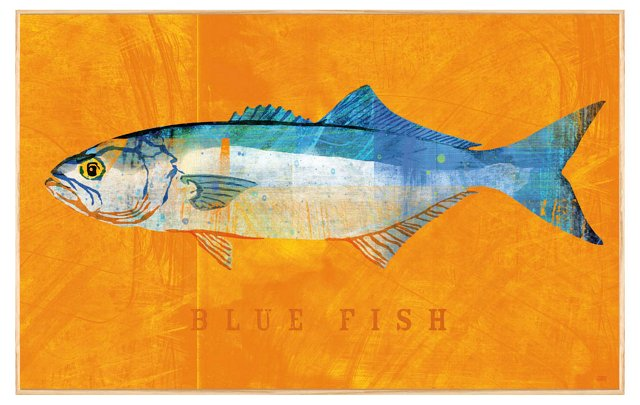 John W. Golden, Bluefish