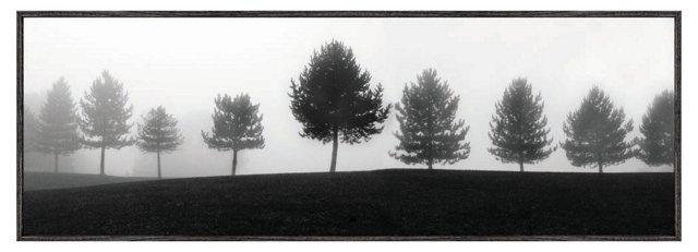 Erin Clark, Tree Line