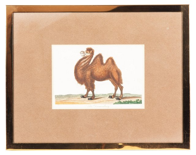 Framed Art, The Dromedary