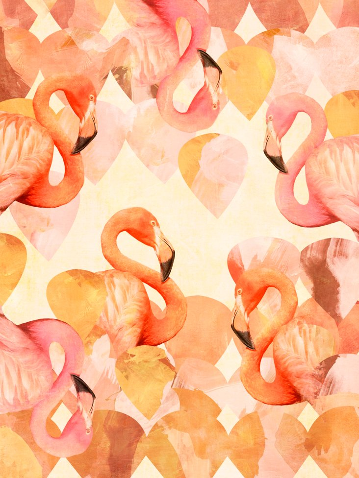 Cozamia, Flamingo Mingle