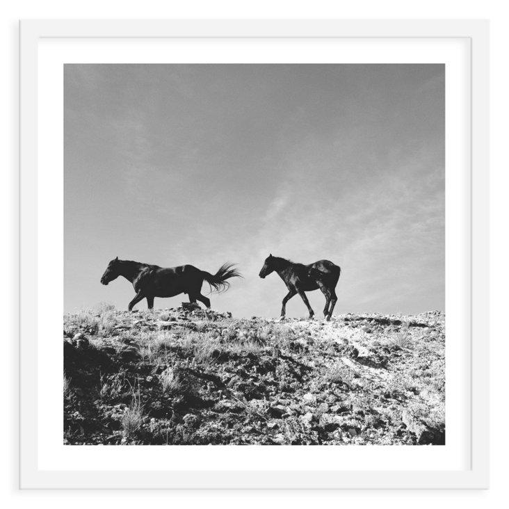 Kevin Russ, Pryor Mountain Wild Mustangs