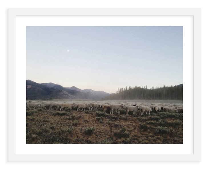 Kevin Russ, Sheep Dust