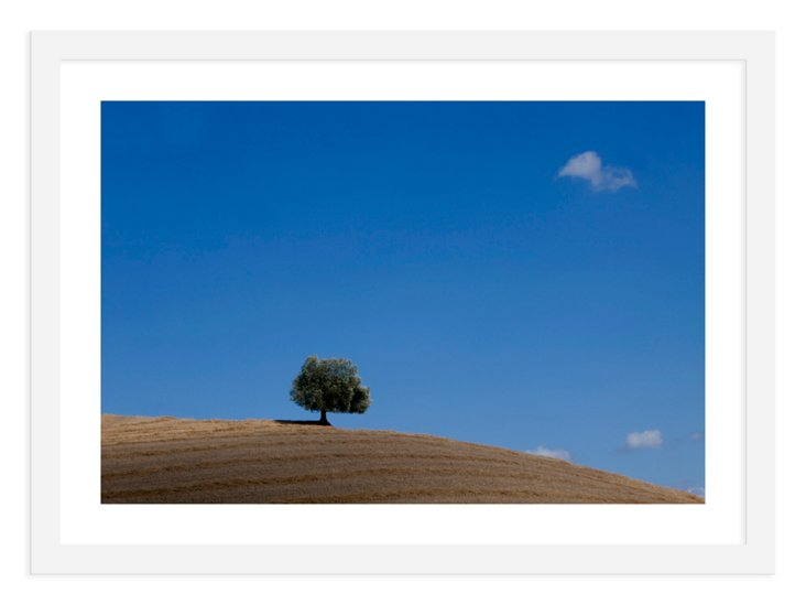 Judith Gigliotti, Tree on Hill in Italy
