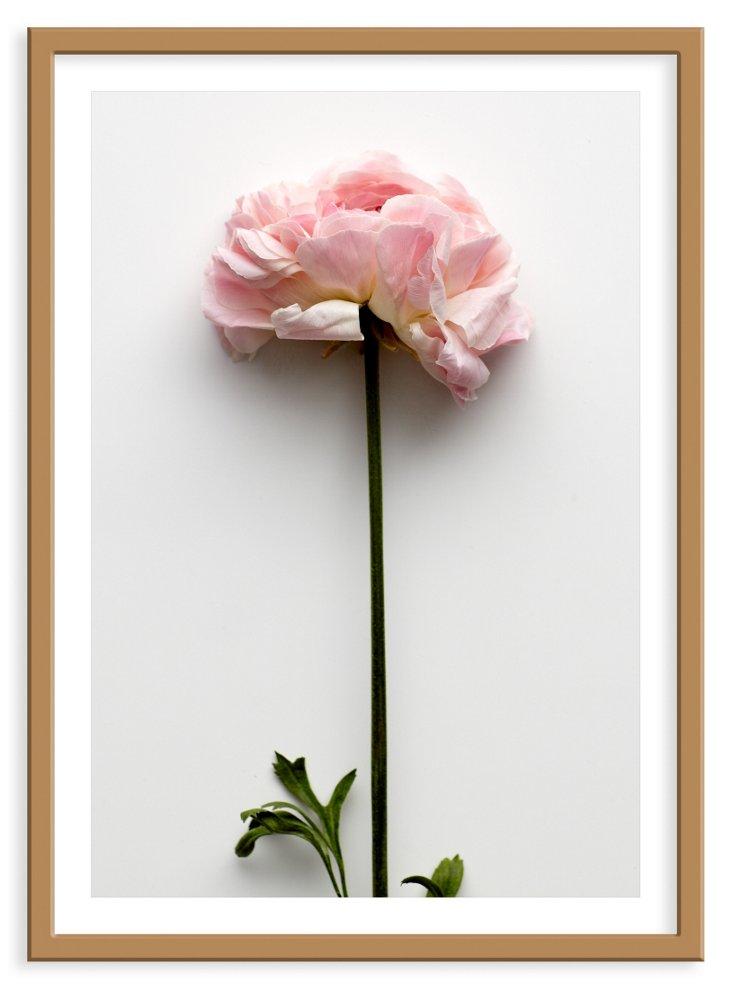 Mason Stefl,  Ranunculus I
